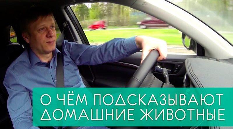 blog-solntseva-o-chyom-podskazyivayut-domashnie-zhivotnyie