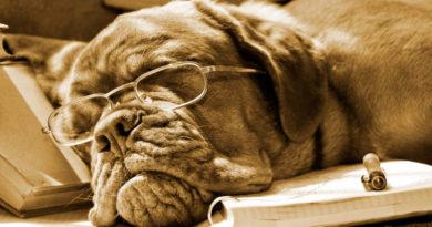 Ритмология, ритмометод 7Р0. Что делать, если учиться скучно, но надо?