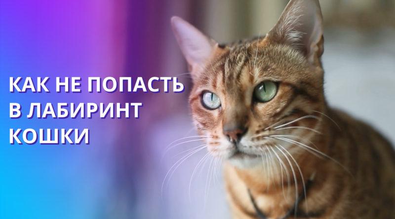 Образ кошки в нашей жизни. Значение кошек с точки зрения ритмологии. Женщины и кошки